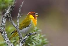 Cultura Acic: Exposição reúne registros de aves do Sul de SC